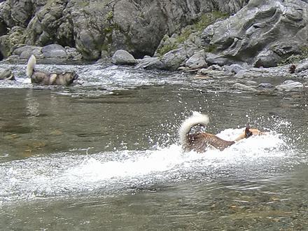 川を渡るジョンと健太