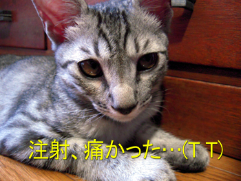 JOJI-001.jpg