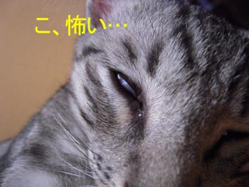 JOJI-011.jpg
