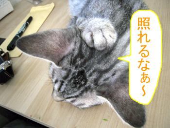 JOJI-027.jpg