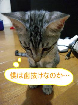 JOJI-055.jpg