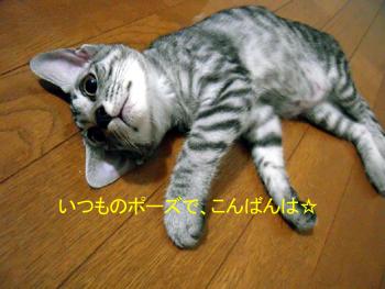 JOJI-057a.jpg