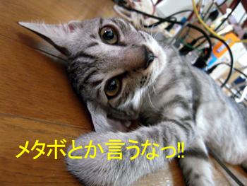 JOJI-073.jpg