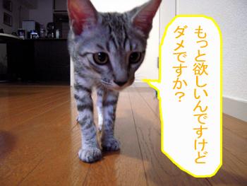 JOJI-123.jpg