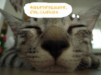 JOJI122.jpg