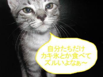 blog033.jpg