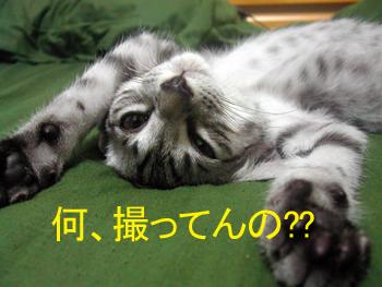 blog038.jpg