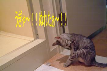blog044.jpg