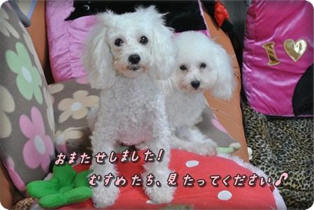0307花梨&こま