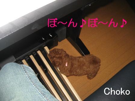 Chokobon.jpg