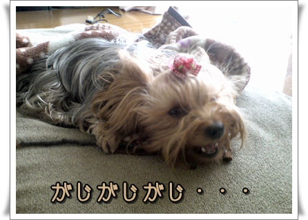 20110127143250p.jpg