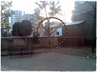 20110204165333p.jpg