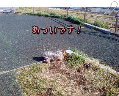 20110305145401p.jpg