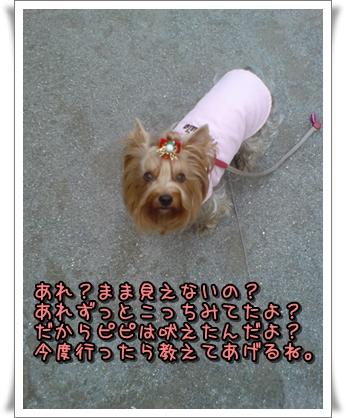DSC00041p.jpg