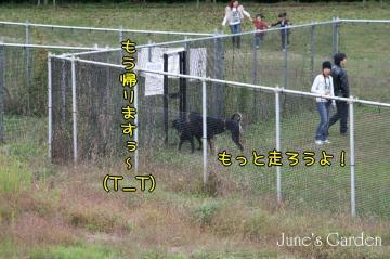 20081012_99_100.jpg