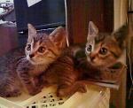 子猫たち 『あたし』 と 『オレ』