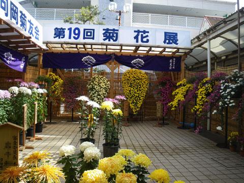 菊花展会場