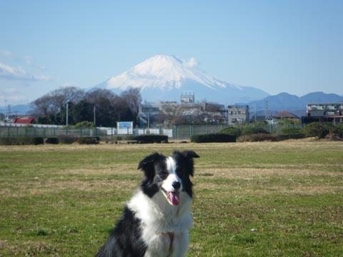 富士山も綺麗だ