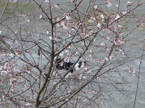 花が咲いてる