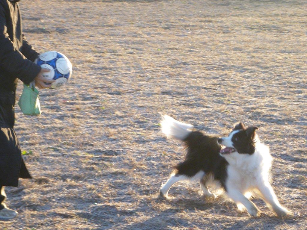 ボール蹴って~