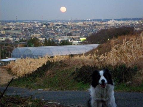 大きなお月様