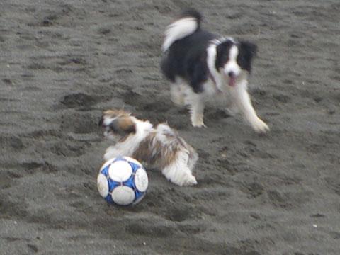 ボールも怖い