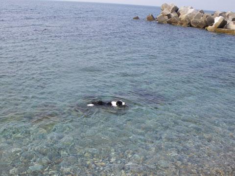 泳ぐのは良いな~