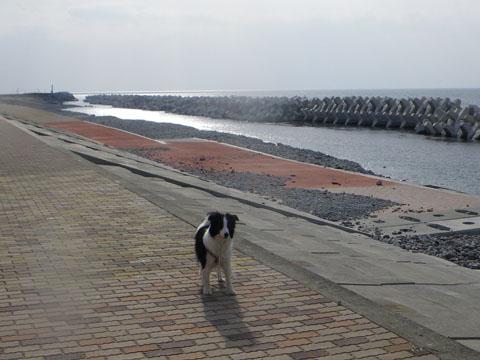 田舎の浜も修復