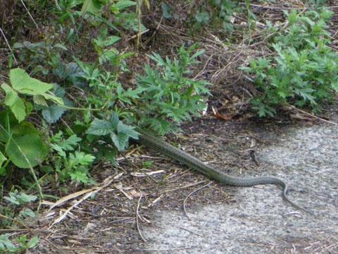 ギエ~!蛇だよ