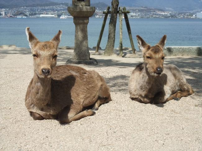 2012年3月20~23日 広島旅行 119