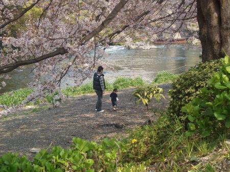 富士の桜4withpapa