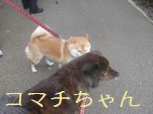 komachi_20090205195314.jpg