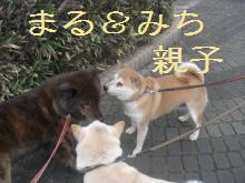 marumichi_20090205195353.jpg