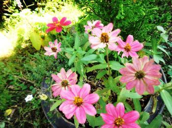 nuu坂のお花
