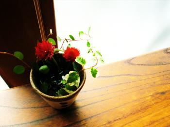 縁側のお花