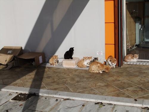ミロス_嵐が去ってホッとする猫さん (2)