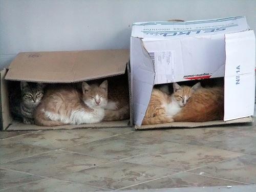 ミロス_猫ハウス