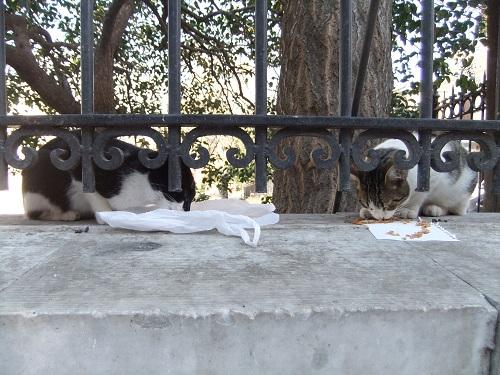 アテネで猫給食 (3)