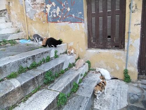 アテネで猫給食 (2)