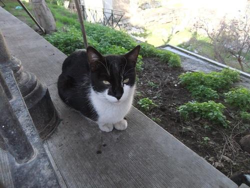 アテネで猫給食 (5)