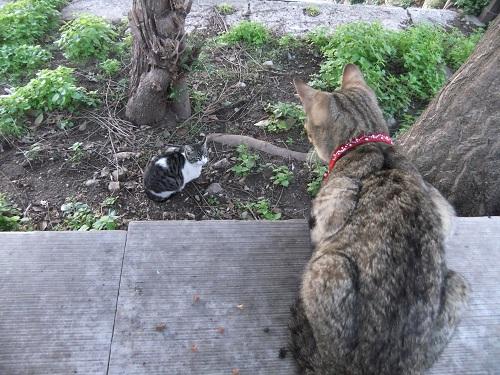 アテネで猫給食 (4)