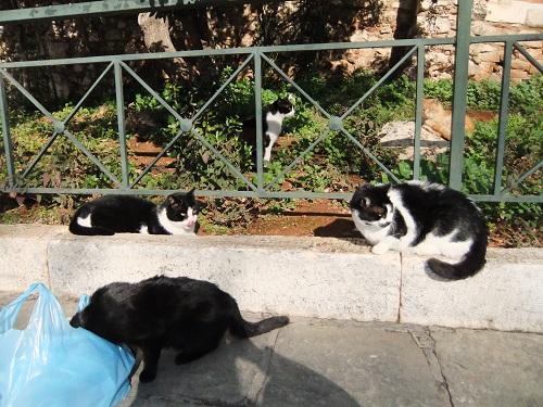 アテネで猫給食 (1)