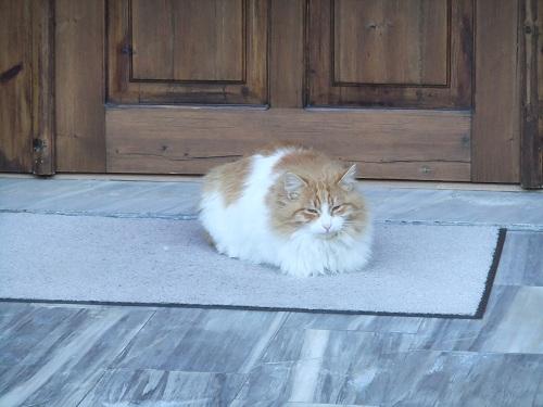 カストリア_ホテルのオーナーの猫さん?
