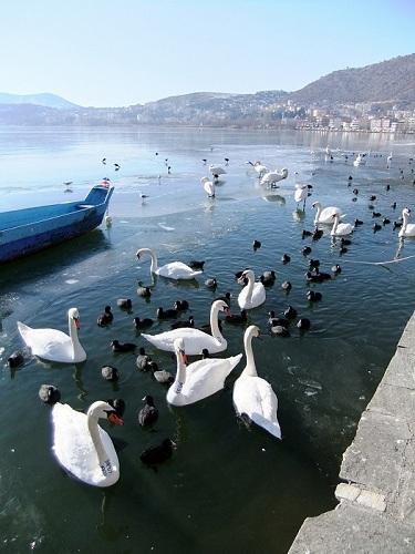 カストリア_湖沿い (2)