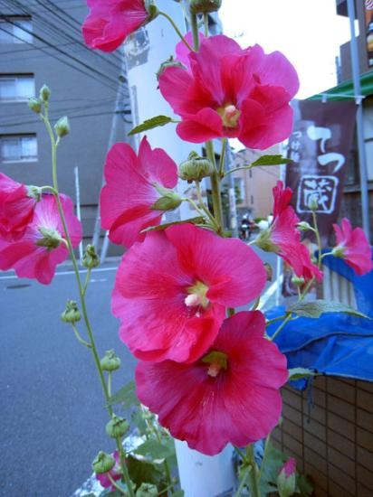 IMG_8464.jpg