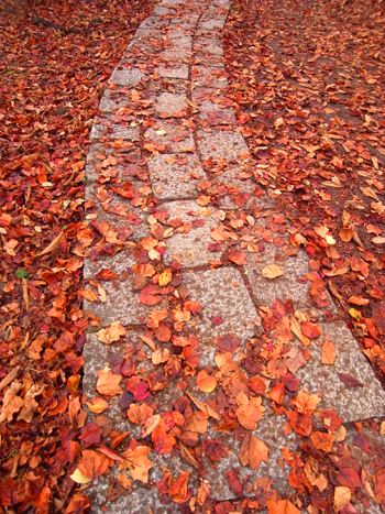 枯葉の絨毯