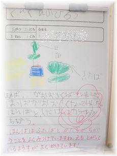 修正分 6.2あさがお日記CIMG0221