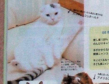 sukozuwari.jpg