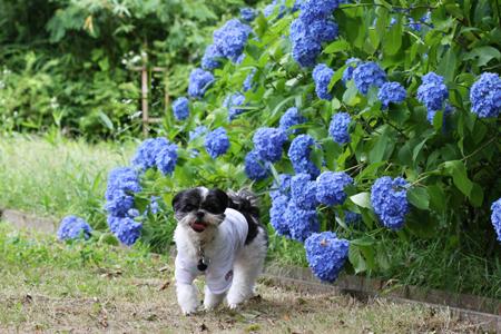 花ならおらにまかせて!