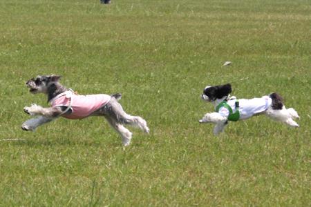 一応、飛行犬。